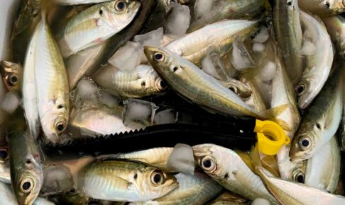 サビキ釣りを始めよう!