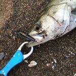 フィッシュグリップを使って安全・快適に釣りを楽しもう