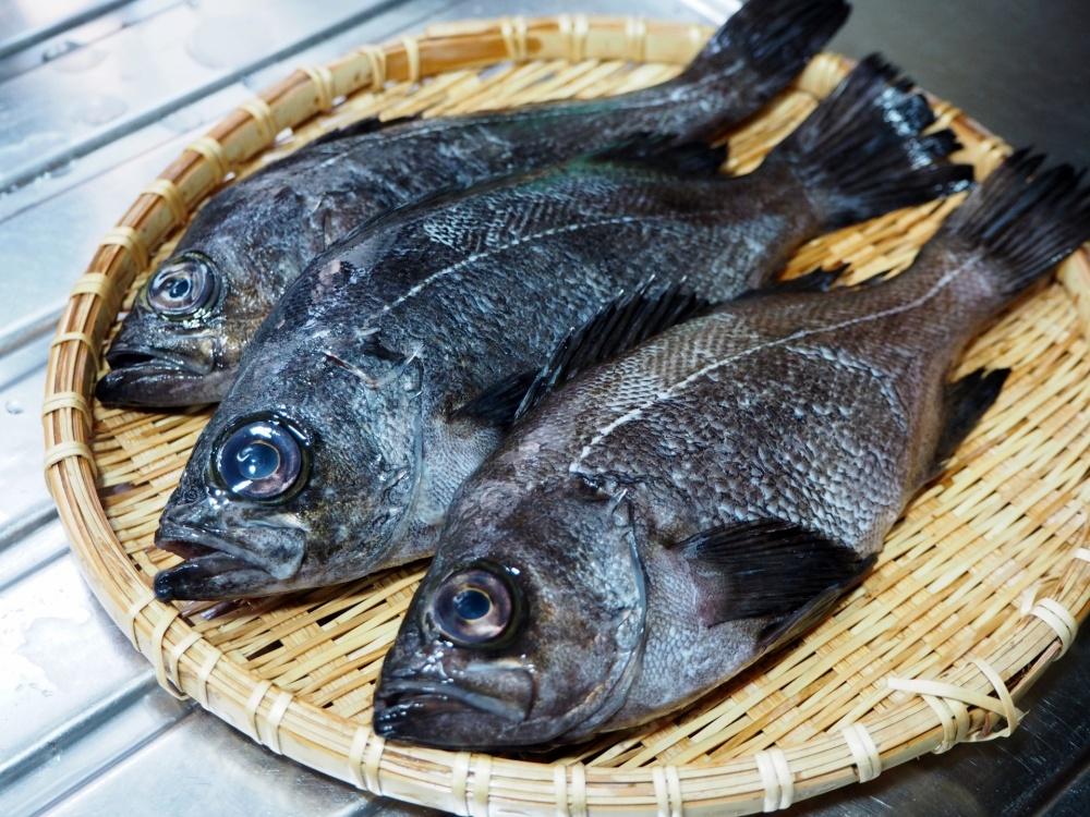 メバルは身近な高級魚