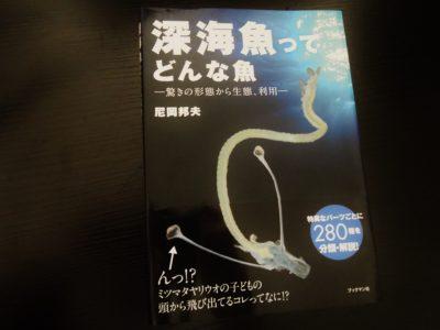 「深海魚ってどんな魚」深海魚は面白い!