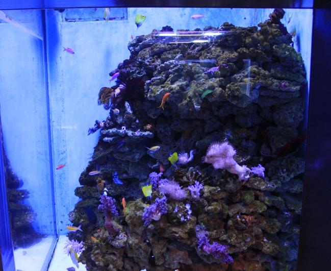 海水魚飼育水槽の準備