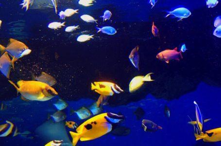 比重計は海水魚飼育の要