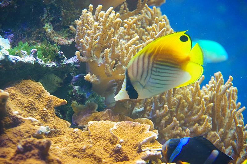 海水魚の飼育にチャレンジ!