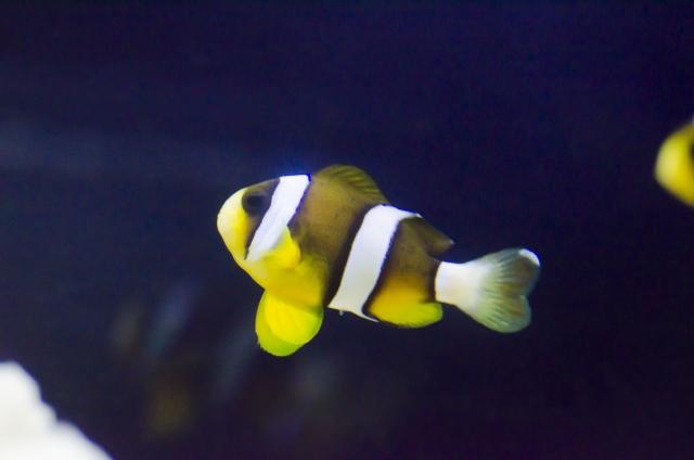 海水魚の飼育は難しい?