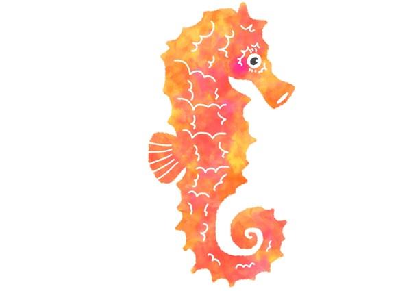 タツノオトシゴはイラスト映えする魚