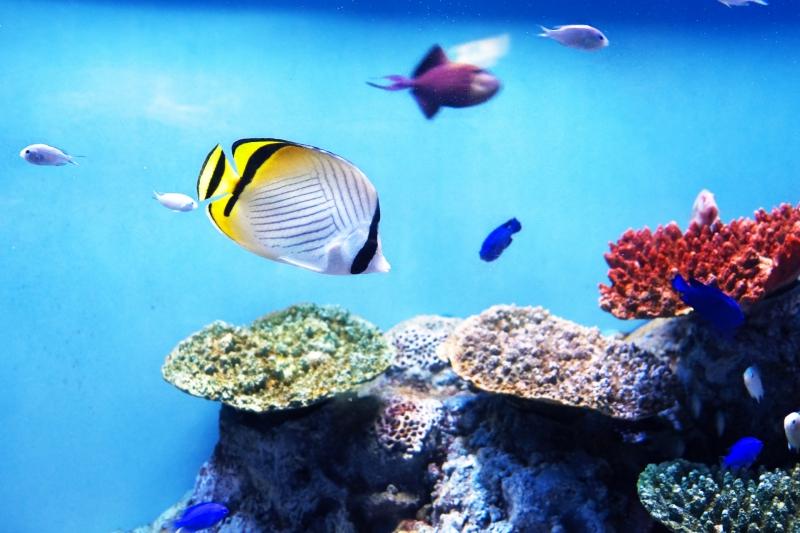人工海水はとっても便利&優れもの