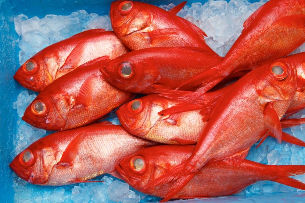キンメダイは海の赤い宝石
