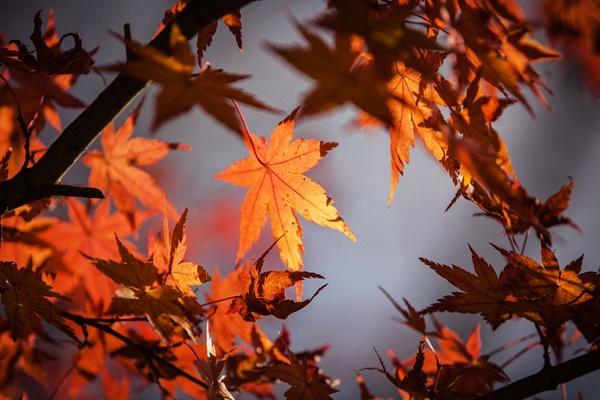秋はシーバスルアー入門にも最適