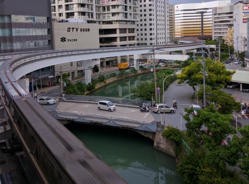 沖縄にはプレコがたくさん