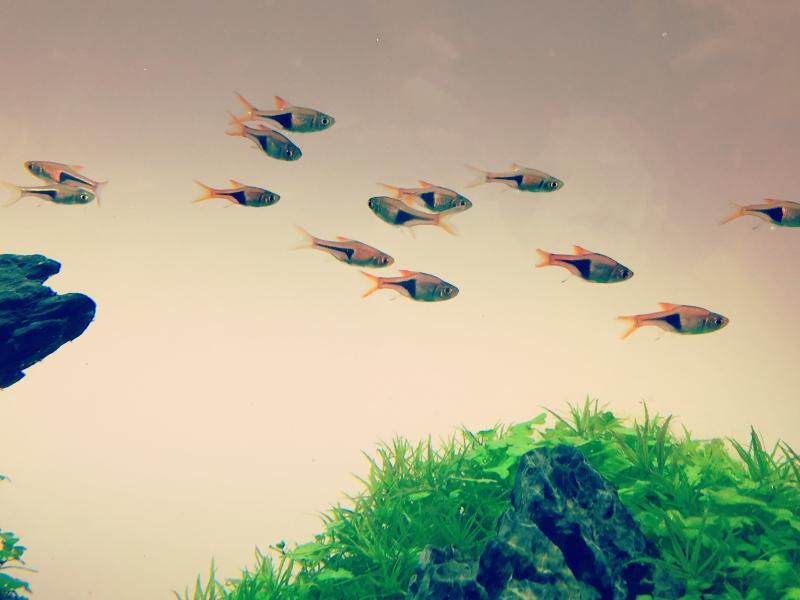 初心者も熱帯魚を楽しもう