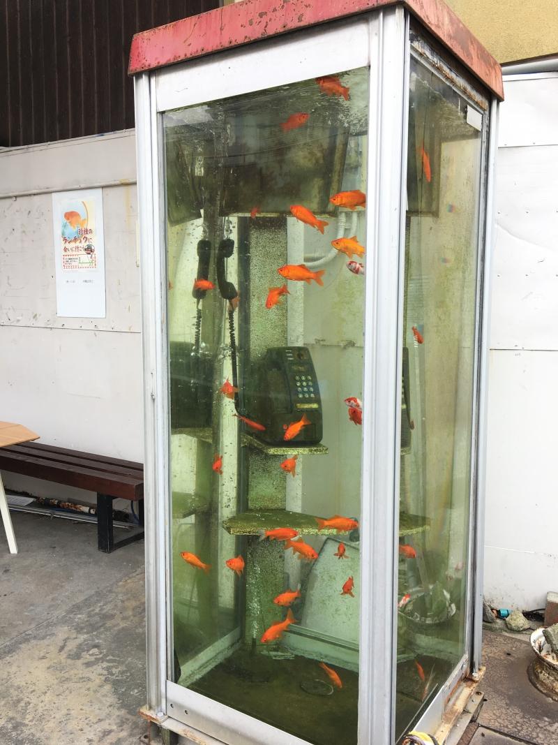 大和郡山の金魚電話ボックス