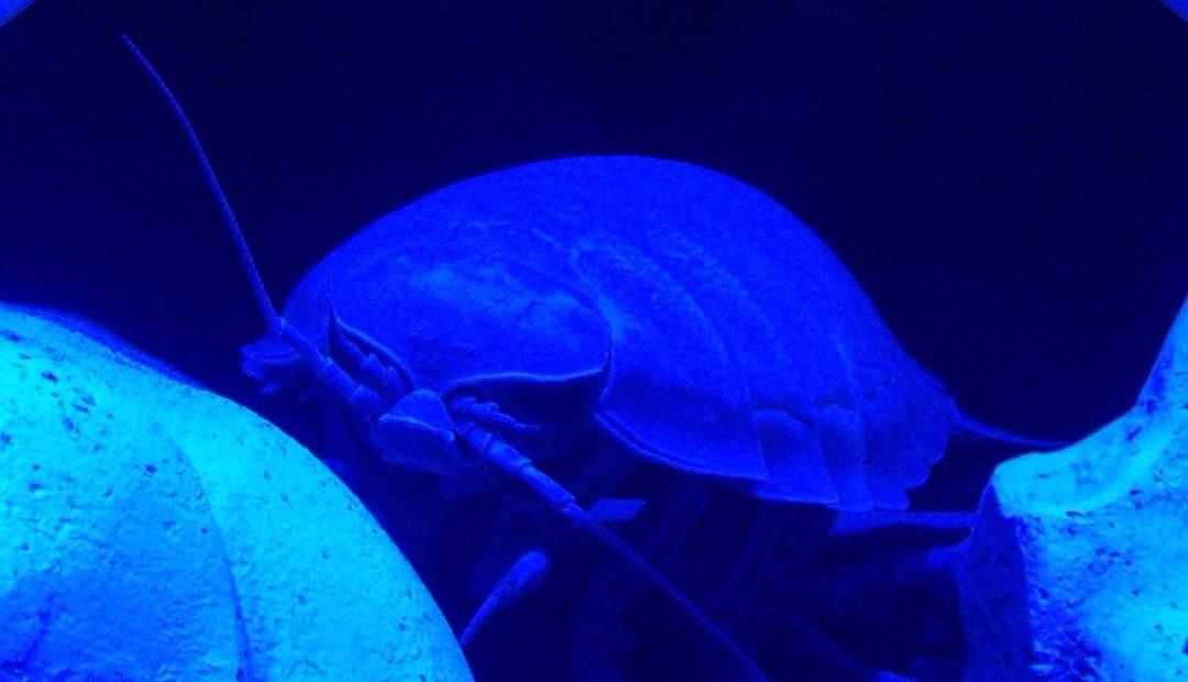 静岡の水族館おすすめ5選