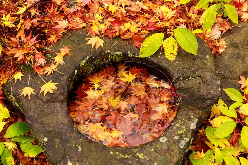 秋の金魚の飼い方