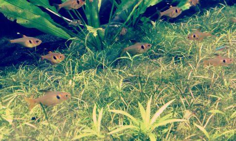 45cm水槽で飼育できる魚たちは?