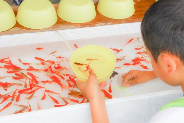 金魚すくいの金魚は飼育してもすぐ死ぬ?