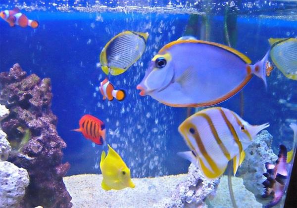 海水魚水槽のエサやりは楽しい!