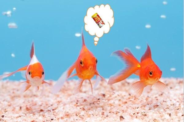 海水魚に淡水魚のエサをあげても良い?
