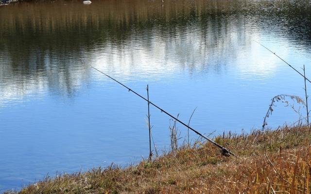 鯉釣りのポイントは?
