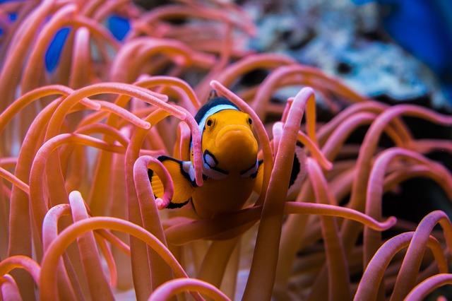 熱帯魚餌の特徴