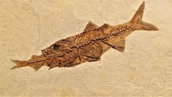 古代魚にはロマンがある!