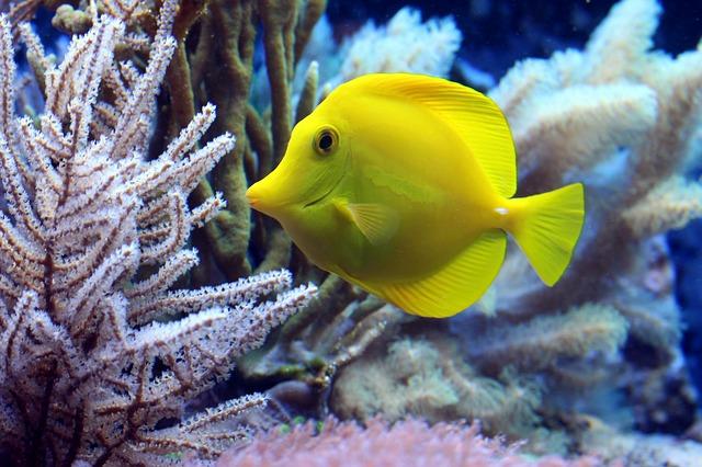 熱帯魚の餌の種類を知る