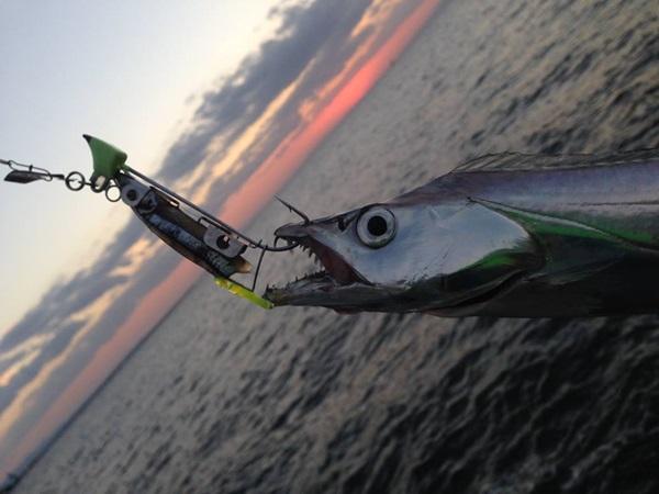 太刀魚テンヤ釣りは楽しい!