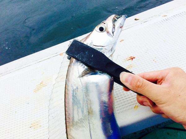 太刀魚テンヤ釣りのコツ