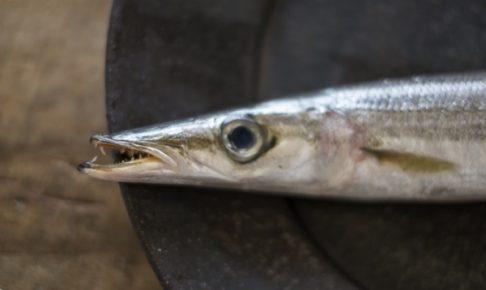 カマスは獰猛な魚?