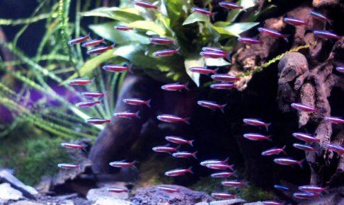 東北の熱帯魚ショップ