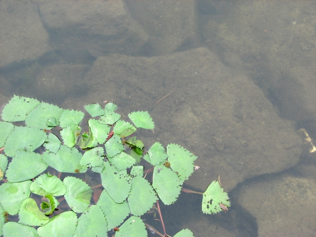浮き草のメリット