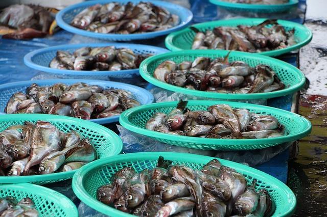 ハタハタは秋田の県魚