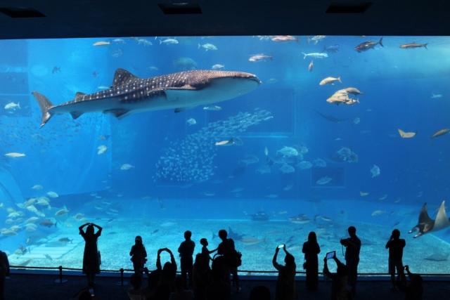 水族館のジンベイザメ