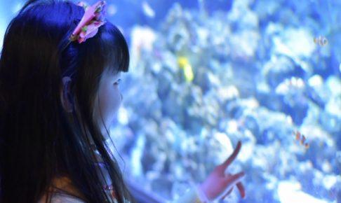 関東の水族館まとめ