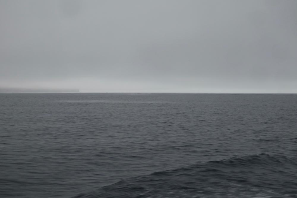 雨の日のアオリイカ