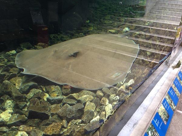 板橋区熱帯環境植物園は東南アジアの珍しい魚が目白押し