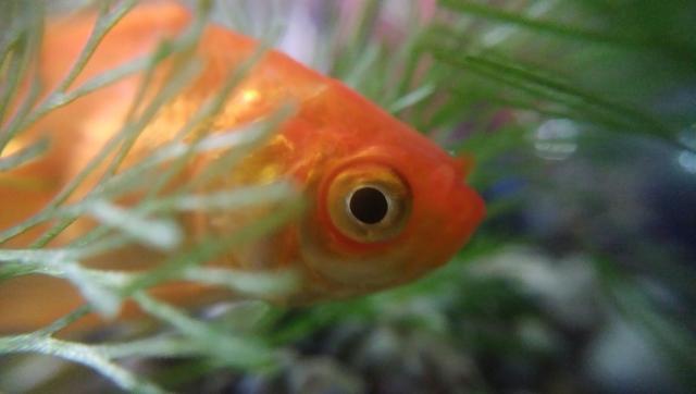 金魚と水草を一緒に入れよう