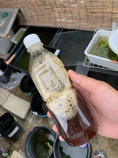 ZENDAMAは花火さんが考案した水質浄化剤