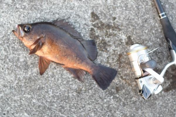 エギングリールはエギング以外の釣りに使える?