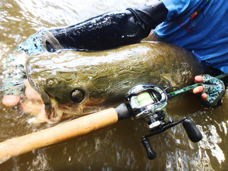ピラルクの釣り