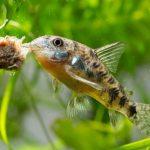 初心者におすすめの熱帯魚