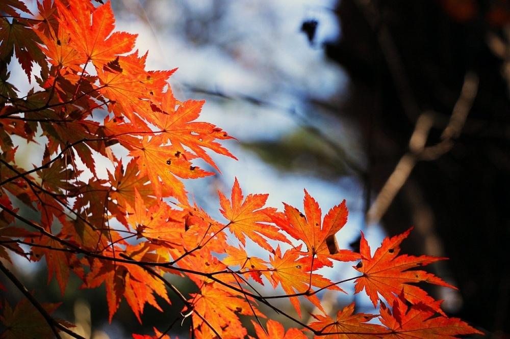 秋からメバリングのシーズン開始
