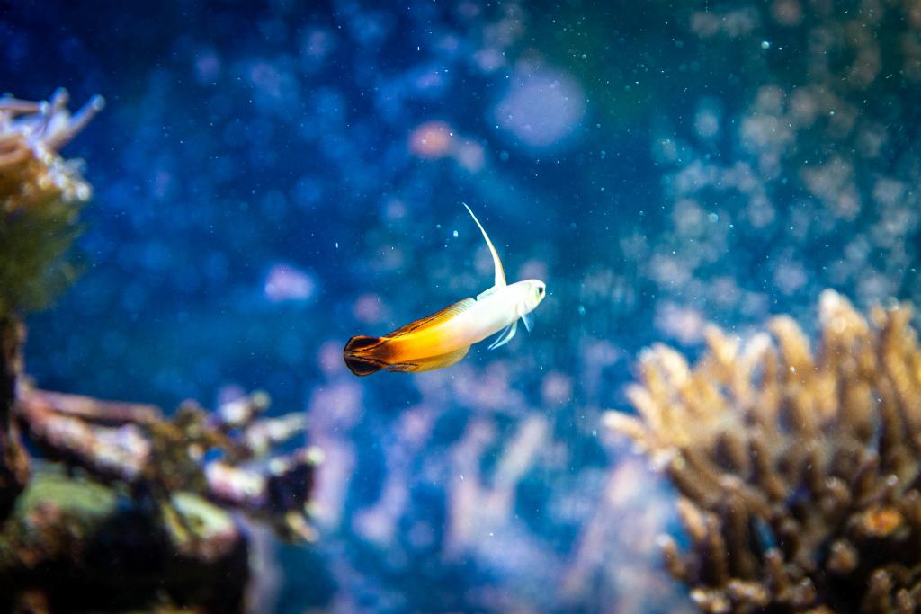 プロテクトXは海水魚にも使用可能