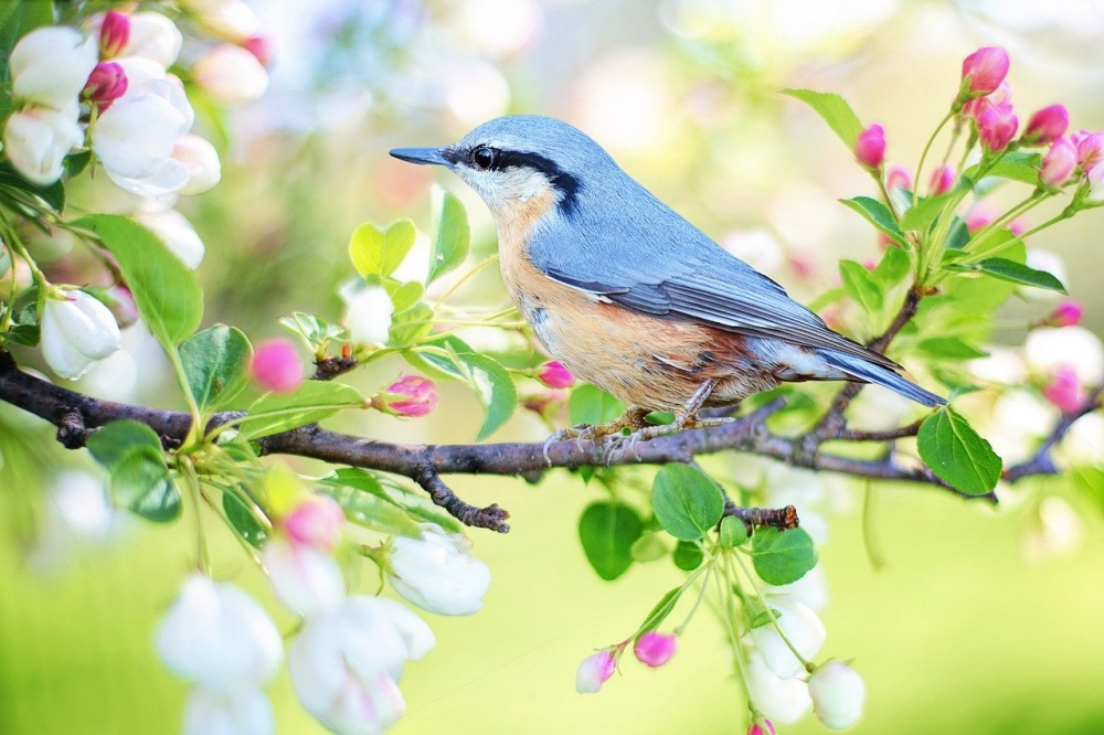 春はメバリングに最適