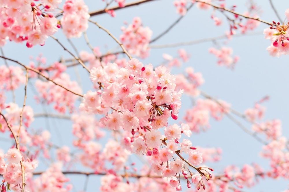 春のアジング攻略