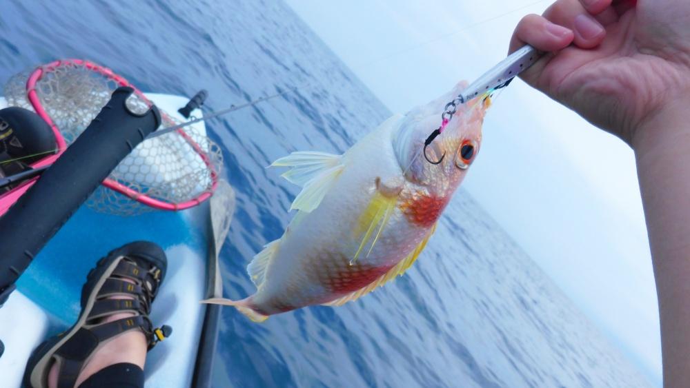 TGベイトはいろんな魚種が釣れる