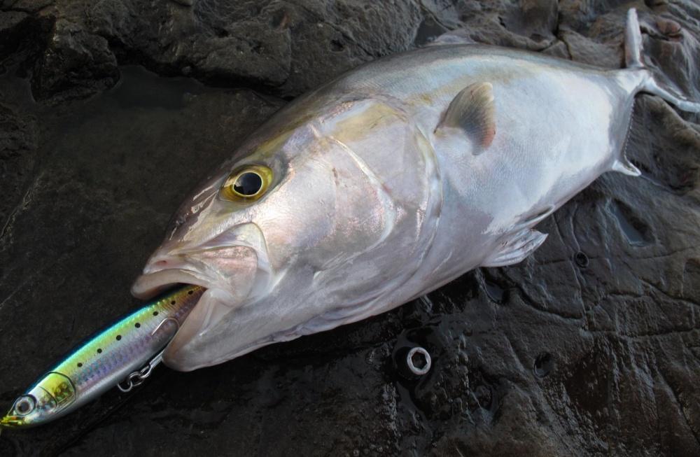 釣りの醍醐味を味わえるダイビングペンシル