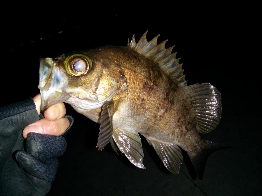 ワインドでメバルを釣る