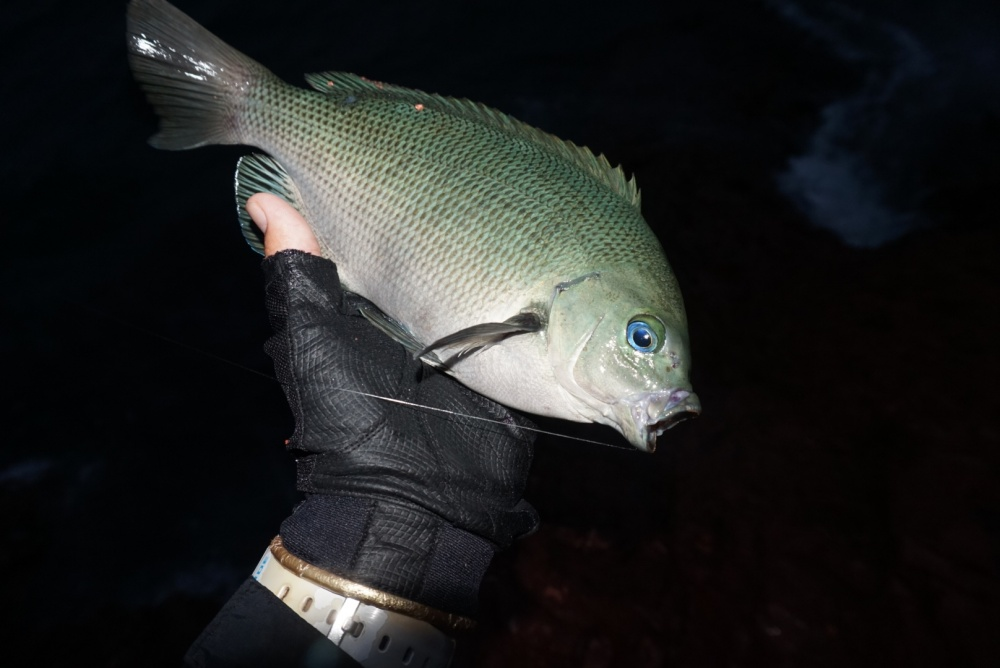 メジナの釣り方
