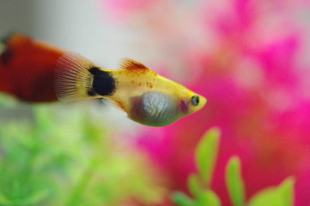 熱帯魚飼育のコツは?
