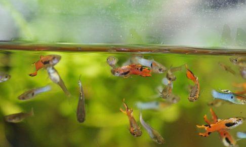 熱帯魚飼育は難しくないよ